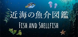 近隣の魚介図鑑