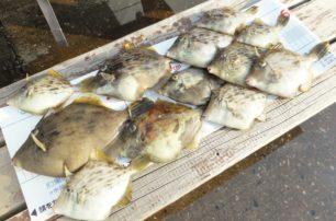 カワハギ釣り大会