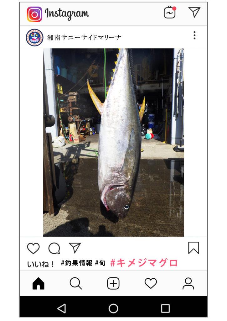 キメジマグロ 25kg 釣果