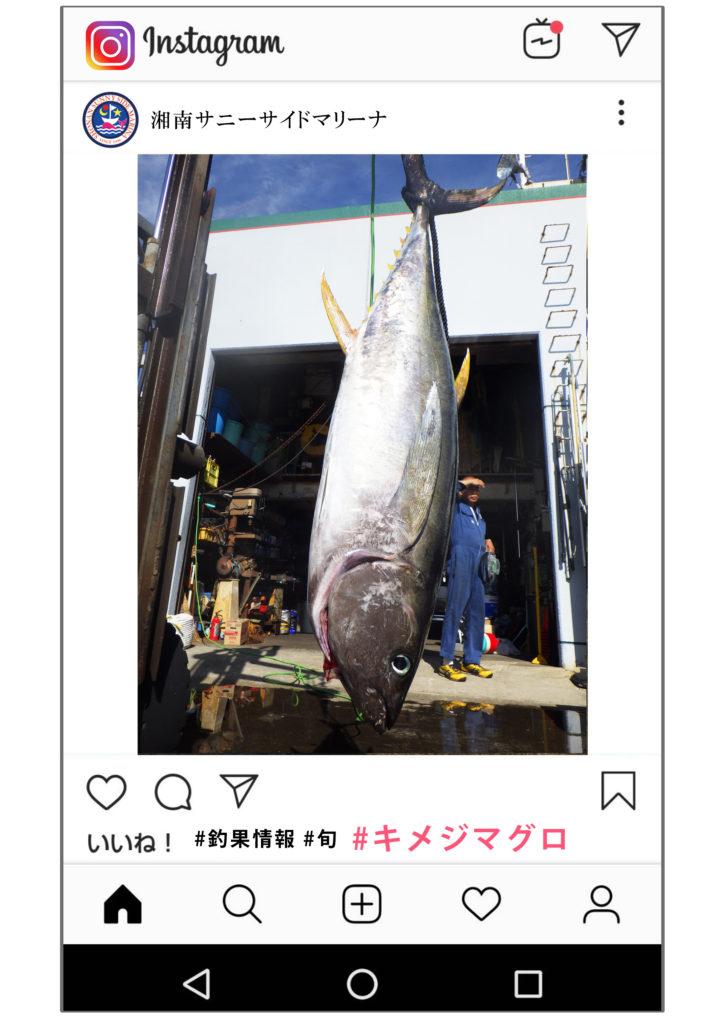 キメジマグロ 27kg 釣果